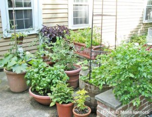 Stress Less: Plant vegetable and herb garden! @ Wellness Center patio